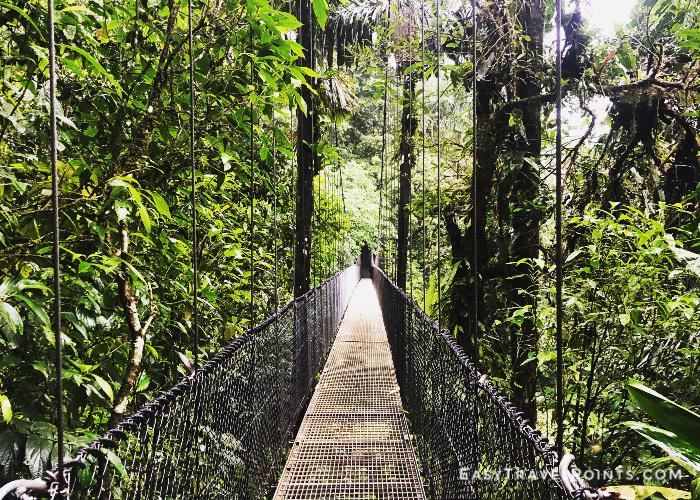 a suspension bridge in a rain forest