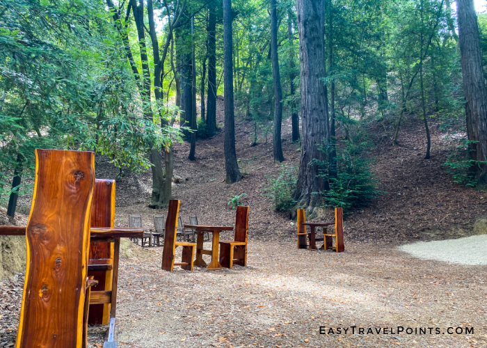 picnic dining in the redwoods